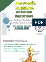 Arterias carotidas.pdf