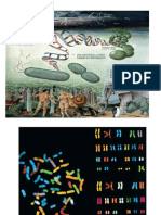 2 DNA-1