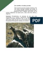 Animales en Extinsión Chile
