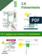 3.8 fotosintesis