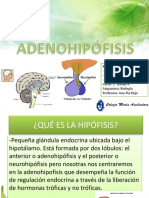 Adenohipófisis Oficial