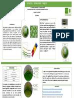 Separacic3b3n Pigmentos Vegetales Cromatografc3ada