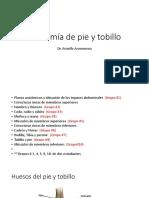 Anato Pie y Tobillo