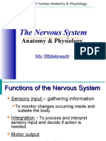 nervoussystemnotes-120213121230-phpapp01