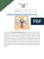 CN_Aparato Reproductor Masculino