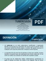 Expo Tubérculos
