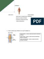 prova anatomia.docx