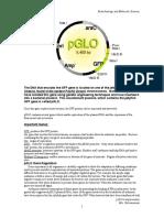 pglo gene regulation.doc