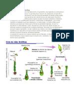Ciclo de Vida de Las Briofitas