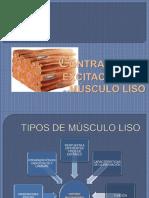 contraccinyexcitacindelmsculoliso-131022171234-phpapp02