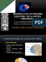Desarrollo CPF y FE