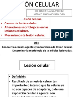 01. Lesion Celular