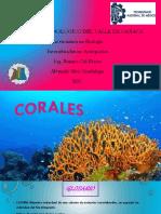 Coral Es