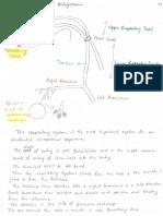 Respiratory System - Schematic Diagram