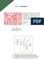 Aula_Pratica_4_Trypanosoma_Leishmania_2009