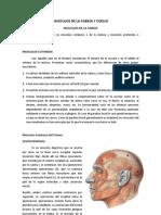 Miología, Cabeza y Cuello