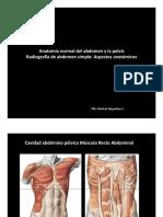 Anatomía Normal Del Abdomen y La Pelvis