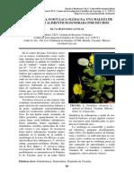 2011-11-03-Hernandez-La-verdolaga.pdf