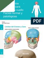 Semiologia Limites Entre Craneo Cara ,Cabeza Cuello y Facies 1
