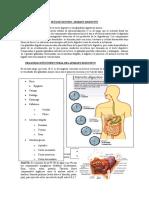 Actividad Sistema Digestivo