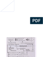 Nurul Fathimah_tatalaksana diagnosis dan diagnosis banding.pptx