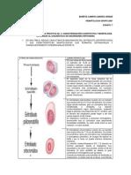identificación de células sanguíneas