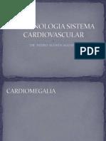 Terminologia Sistema Cardiovascular
