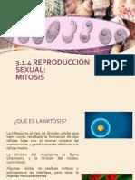 3.1.4 Reproduccion Sexual,Mitosis.
