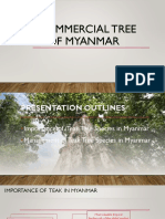 Teak_Commercial Tree Species of Myanmar