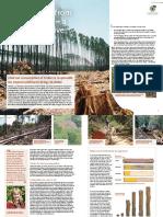 DriverDeforestation Timber ENG