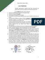 Filo Ctenóforos.pdf