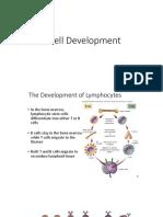 B Cell Development 2
