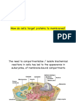 7. How Cells Target Proteins to Membranes and Organelles