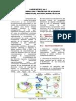 Lab Oratorio No 5 Componentes Del Protoplasm A