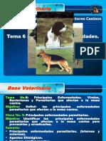Base Veterinaria Parasitos.act