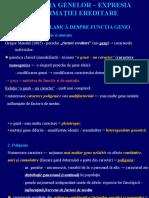Gena - Functie. Procesarea Proteinelor