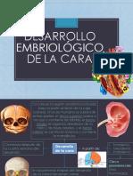 Desarrollo Embriológico de la cara