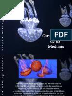 Carlos  Michel  Fumero - Características  de las Medusas