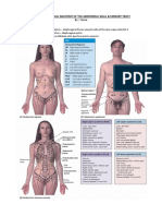 Clinical Oriented Anatomy 3.3 S1-1