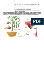 Las Estructuras de Una Planta