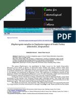 Blepharopsis Mendica in Euphrates Region