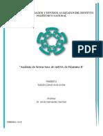 Análisis de Estructura de MRNA de Filamina B