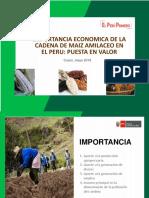 Exp Importancia Economica de La Cadena de Maiz Amilaceo en El Perú