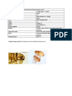 Ctenocephalides canis.docx