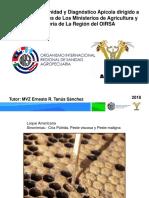 Diapositiva La America y otras.pdf