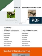amphibians presentation