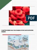Immunoematologia