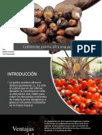 Cultivo de Palma Africana Aceitera