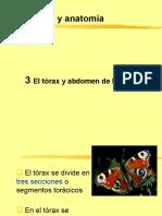Clase 06 Entomología (Sistemática - Primera Parte)