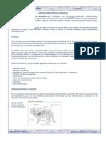 SISTEMA ENDOCRINO EN ANIMALES.docx